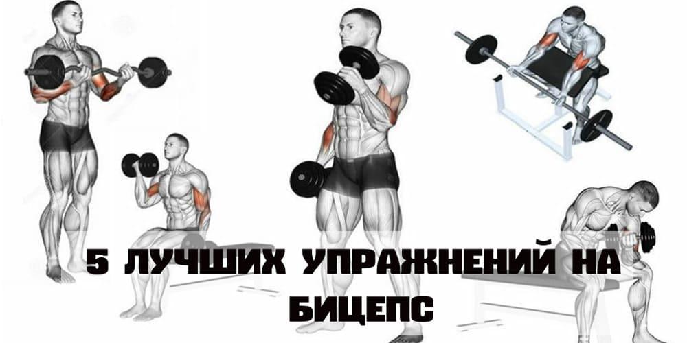 упражнения на бицепс