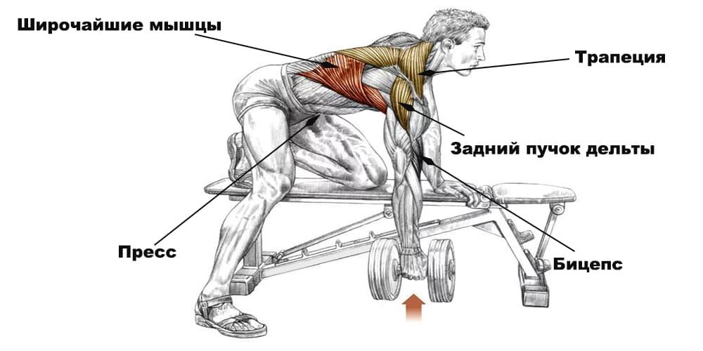 Тяга гантели к поясу мышцы