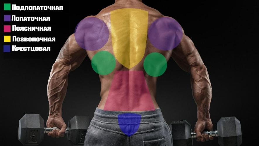 Расположение мышц спины