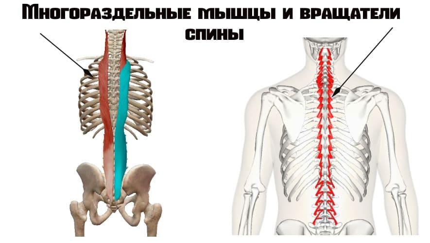 Многораздельные и вращатели спины