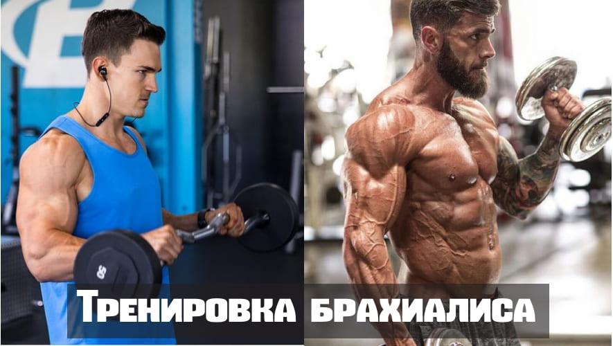 Мышцы плечевого пояса мышцы плечевого сустава thumbnail