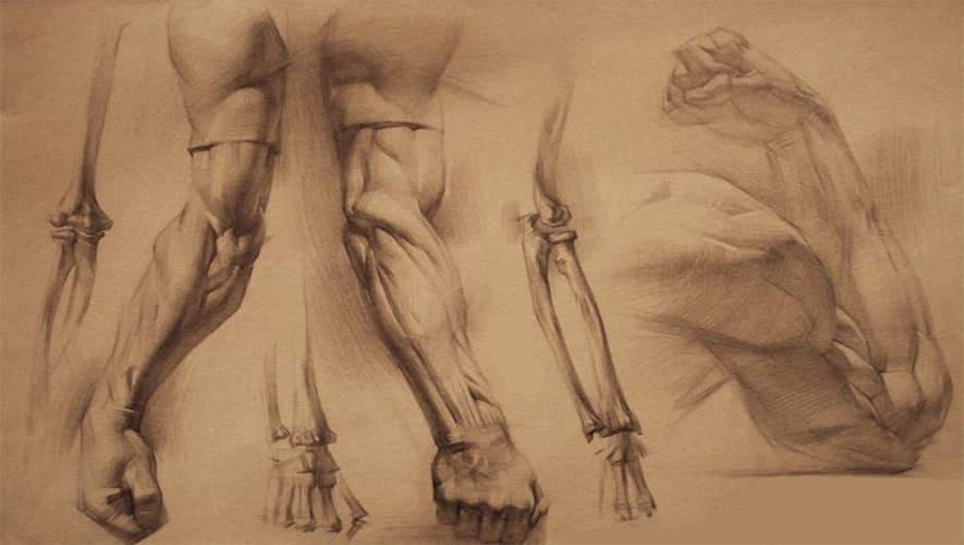 Мышцы руки