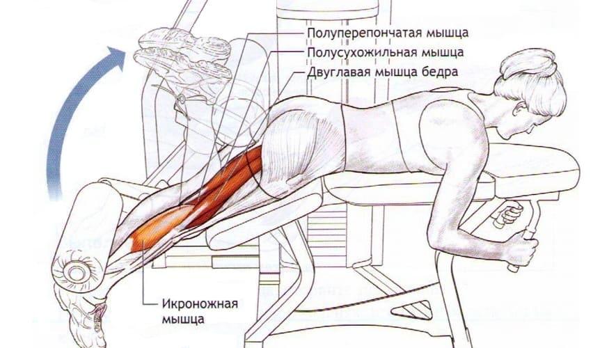Мышцы работающие в Сгибание ног в тренажере