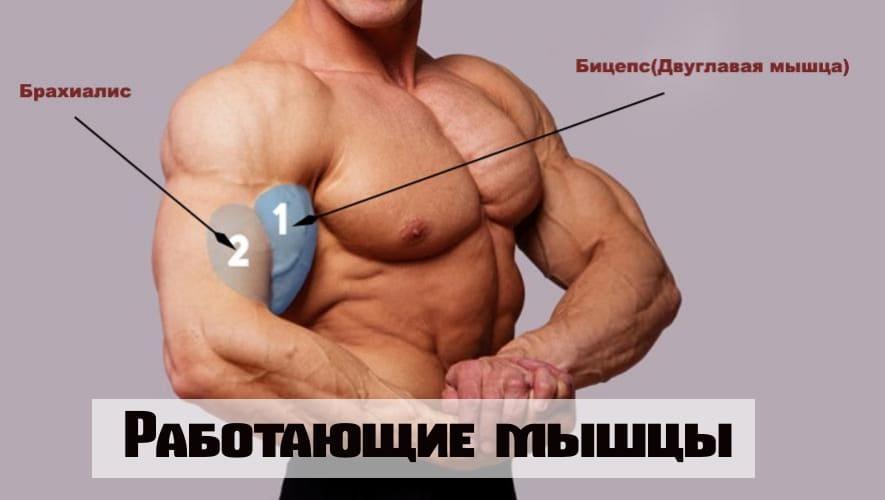 Работающие мышцы при строгом подъеме на быцепс