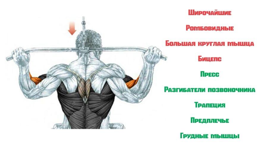 Работающие мышци при тяги верхнего блока