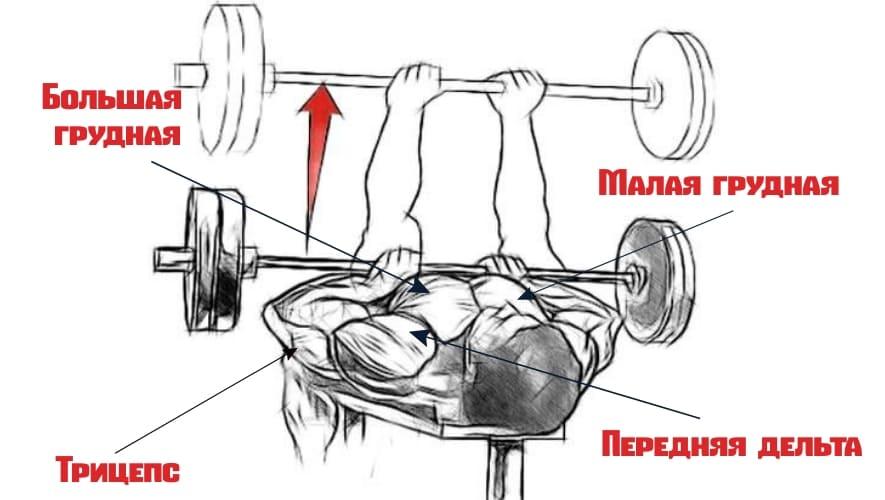 Какие мышцы работают при жиме лежа узким хватом