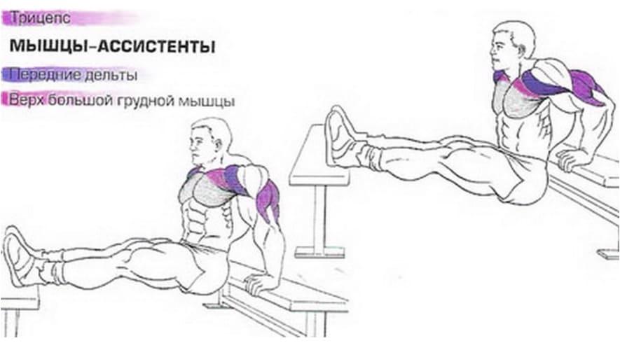 мышцы работающие при обратные отжимания