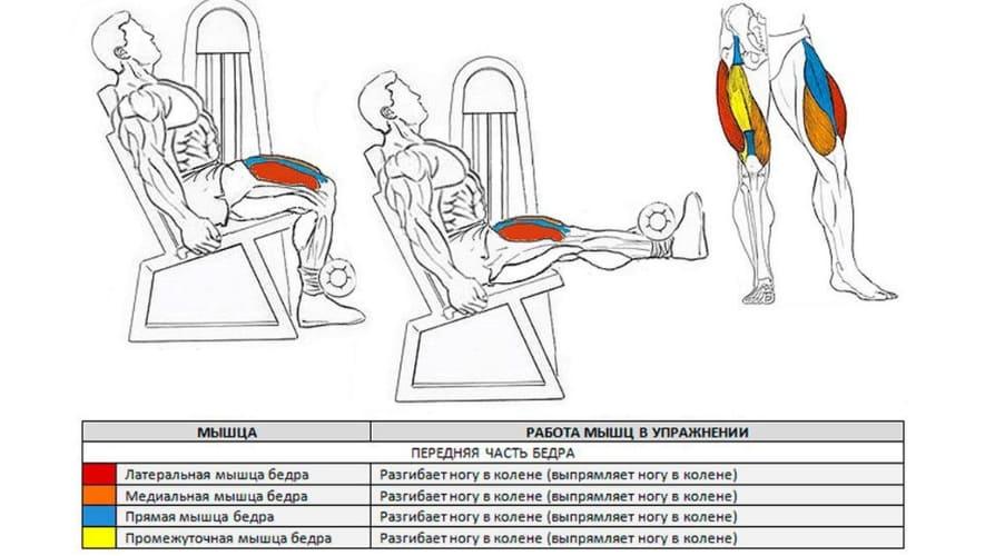 Работающие мышцы Разгибание ног в тренажере