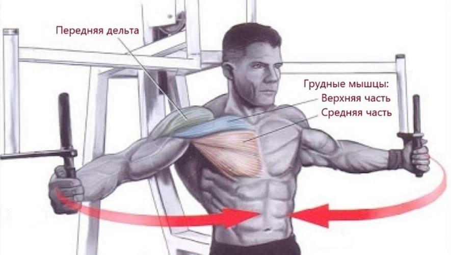 мышцы работают в сведение рук