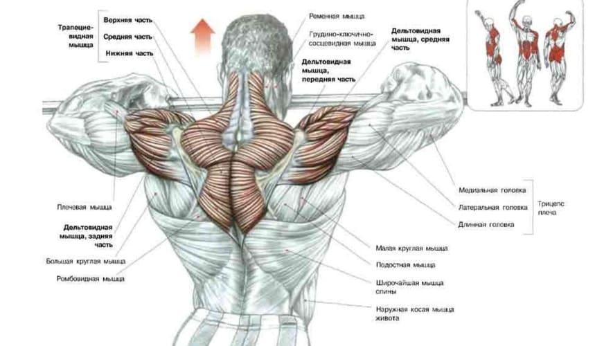 мышцы задействует тяга к подбородку