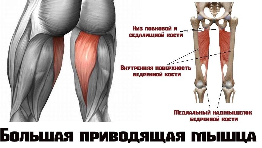Большая приводящая мышца