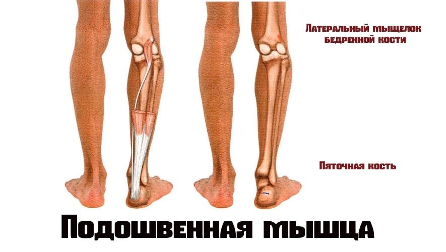 Подошвенная мышца