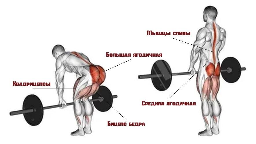 Какие мышцы задействует румынская тяга