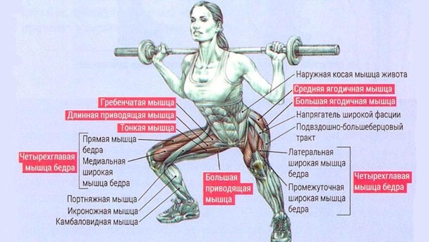 Какие мышцы задействует приседания сумо