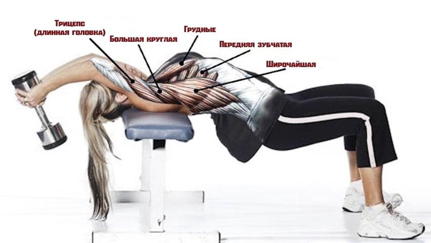Какие мышцы задействует пуловер с гантелью