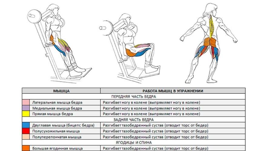 Какие мышцы задействуют гакк приседания