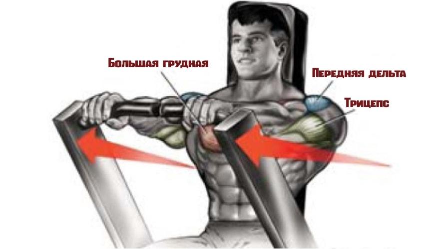 Жим в тренажере от груди работающие мышцы