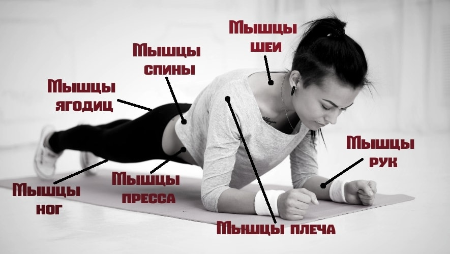 Планка работающие мышцы