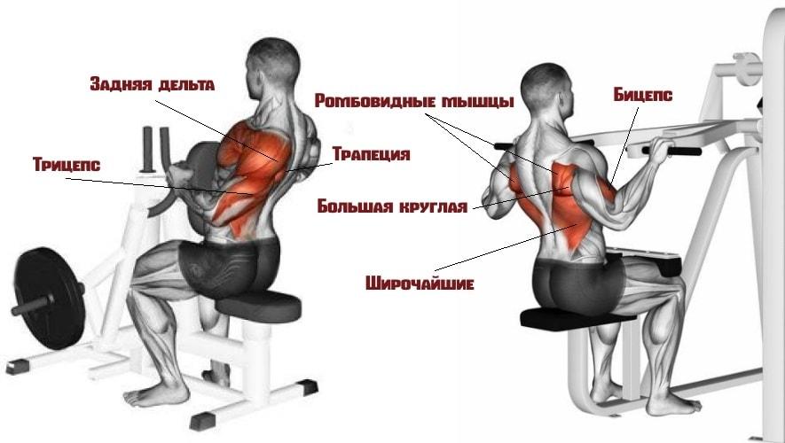 Какие мышцы задействует рычажная тяга