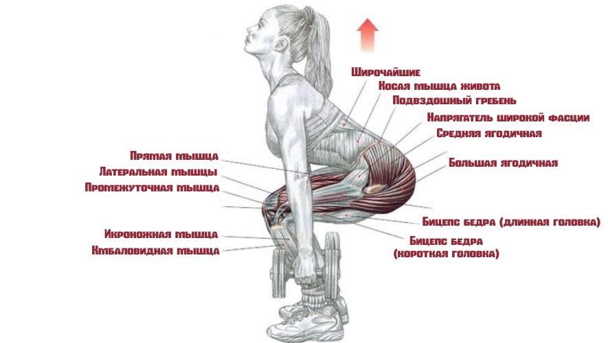 Приседания с гантелями работающие мышцы