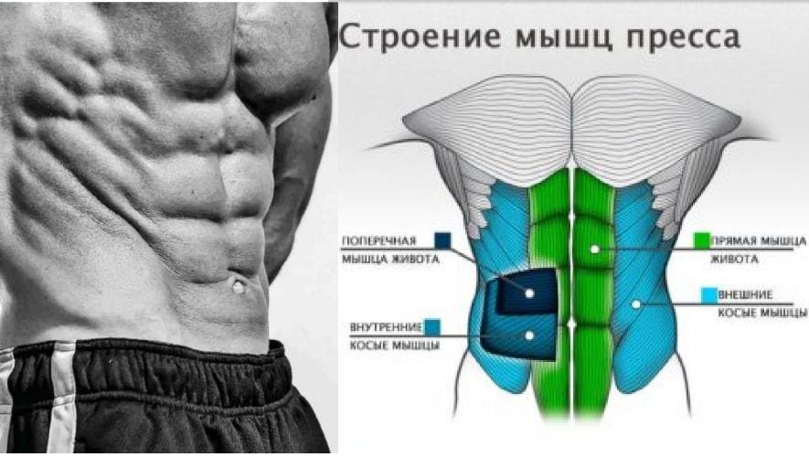 Анатомия боковых мышц пресса