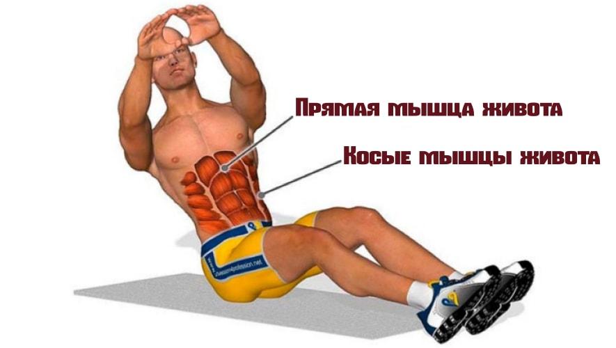 Русские скручивания работающие мышцы