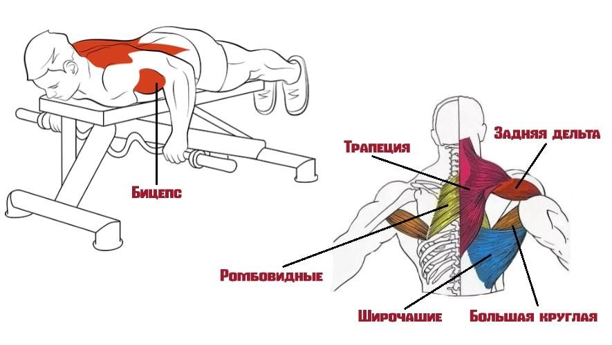 Тяга штанги лежа работающие мышцы