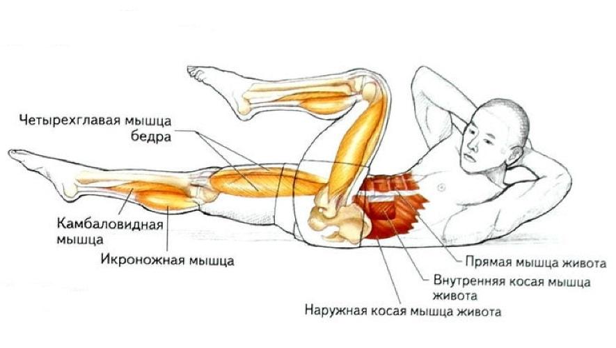 Упражнение велосипед  работающие мышцы