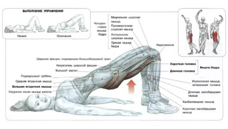 Ягодичный мостик работающие мышцы