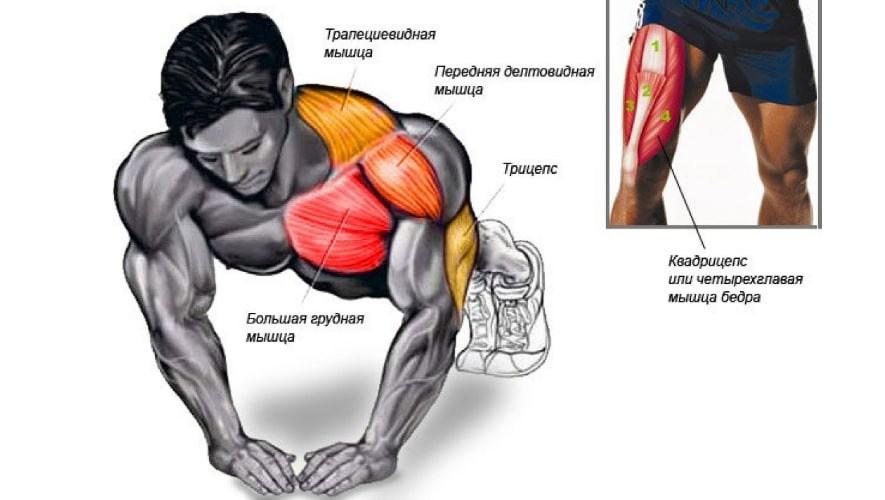 Алмазные отжимания работающие мышцы