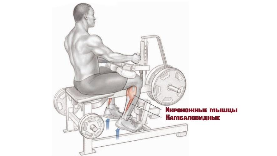 Подъем на носки сидя работающие мышцы