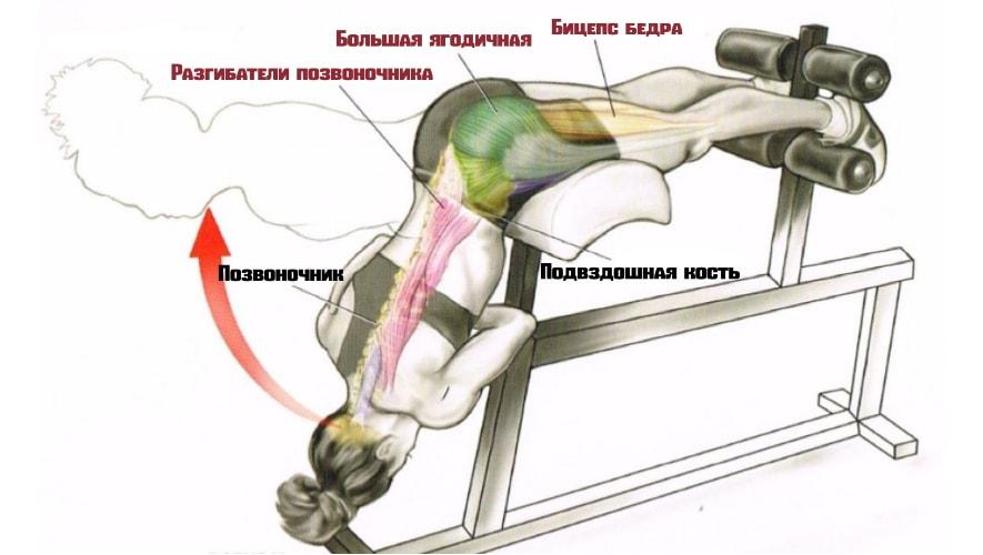 гиперэкстензия работающие мышцы