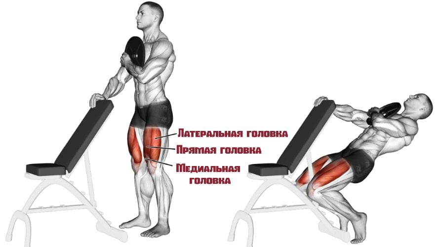 Сисси приседания работающие мышцы
