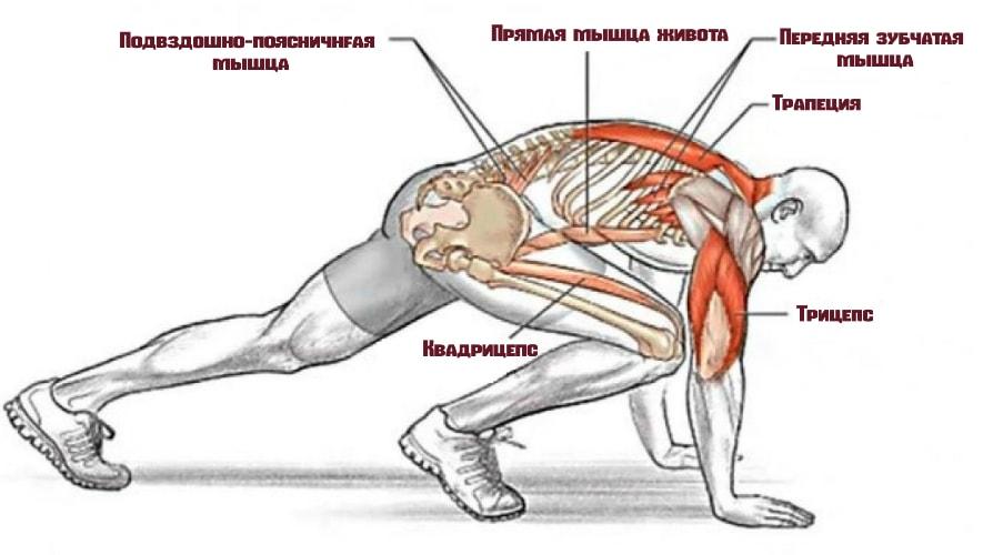 Какие мышцы задействует упражнение альпинист