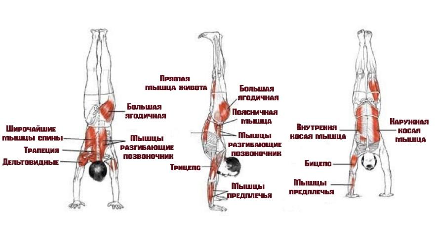Вертикальные отжимания работающие мышцы