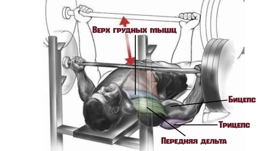 Жим лежа обратным хватом работающие мышцы