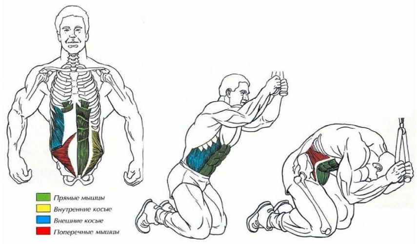 Скручивания на верхнем блоке работающие мышцы
