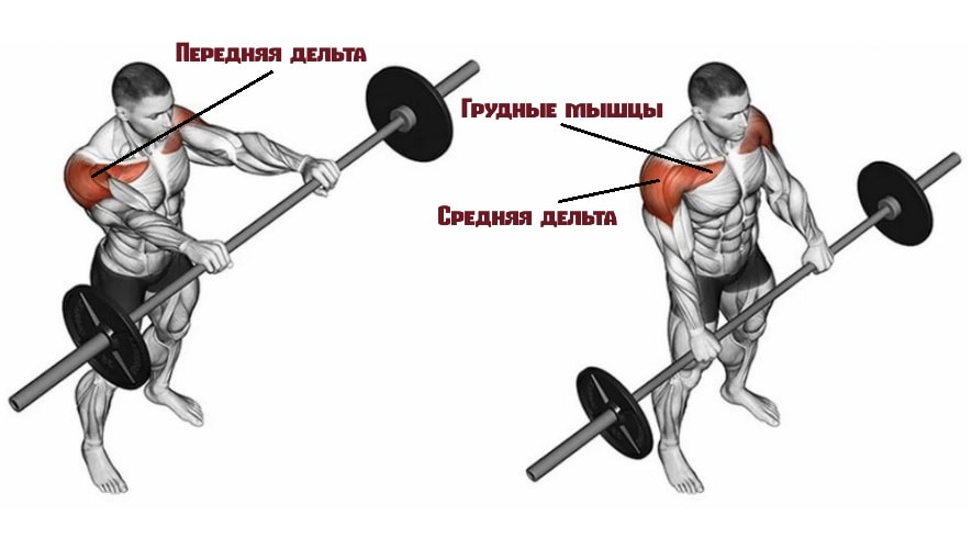 Подъемы штанги перед собой работающие мышцы
