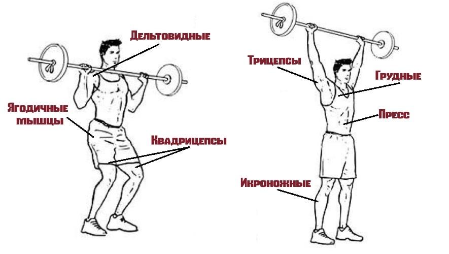 Швунги со штангой работающие мышцы
