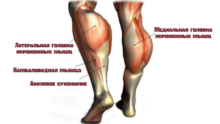 мышцы задействует упражнение ослик