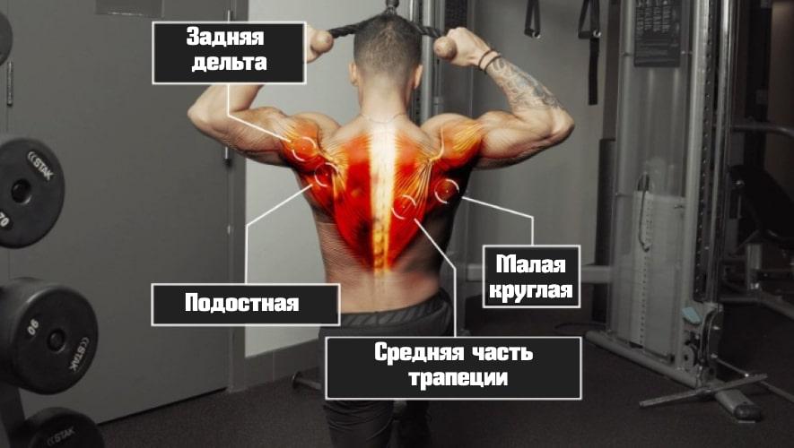 Тяга к лицу работающие мышцы