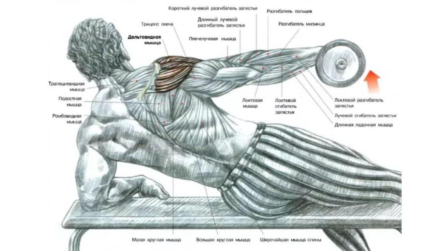 Подъемы в сторону лежа  мышцы