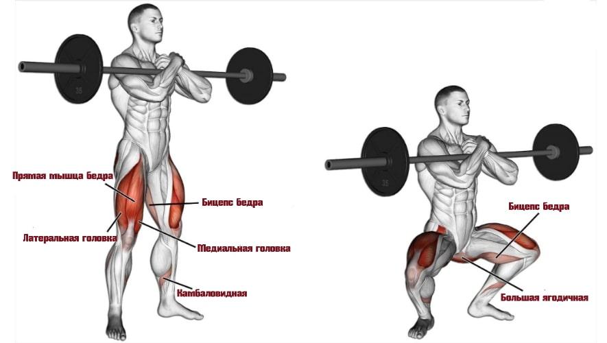 приседания зерхера работающие мышцы