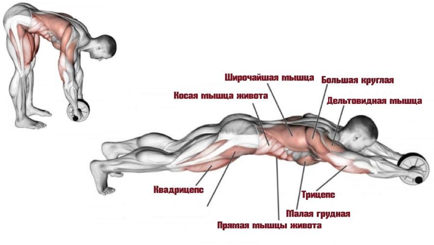 Упражнения с роликом работающие мышцы