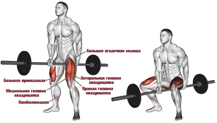 Какие мышцы задействуют приседания Джефферсона