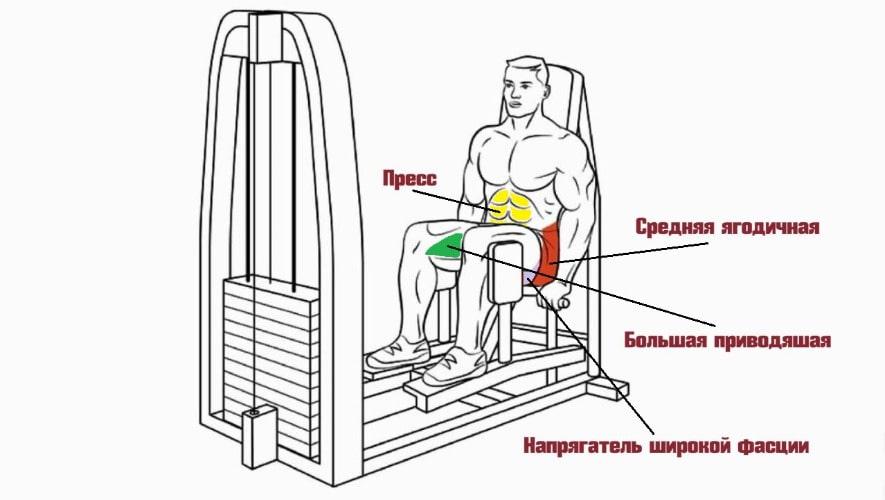 Работающие мышцы в разведении ног